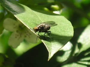 ¿Cuántos pares son tres moscas?