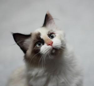 El mes de los gatos