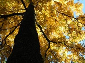 Por fin otoño