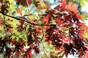 Pleno otoño
