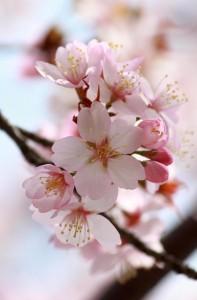 La primavera y un ganador ya aparecerán
