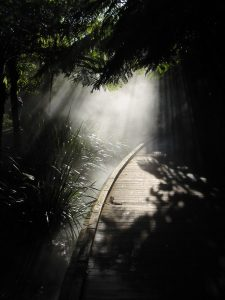 Una luz en el camino